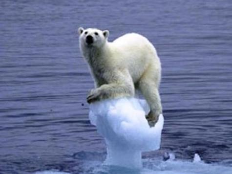 global_warming and polar bears