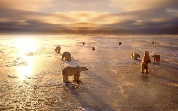 BEARS_ICE