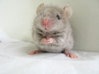 cutest-mouse-photo-06