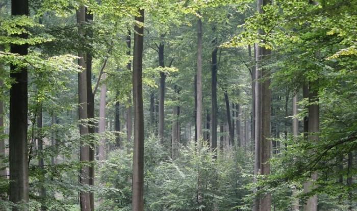 Pineforrests-Brussels_Zonienwoud-750x444