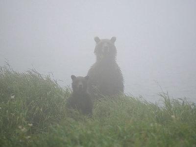 bearsintheMistpic002