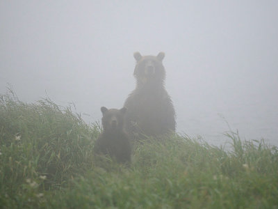 bearsintheMistpic002